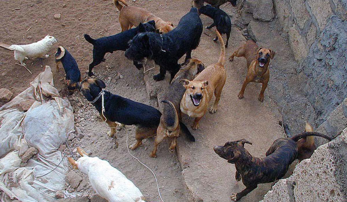 La perrera funcionó desde el año 2000 hasta 2012 en una una finca de Atogo, en Granadilla. DA