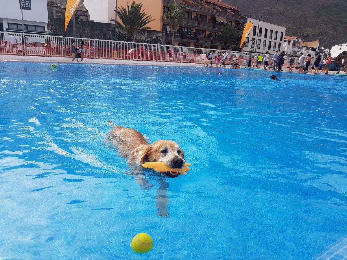 Los perros se adue an por un d a de la piscina municipal de garachico para un fin ben fico - Piscinas de patas ...