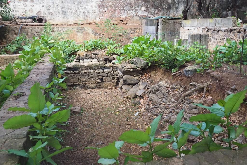 Detalle de una de las partes de la fuente y la vegetación de su alrededor.  S. M.