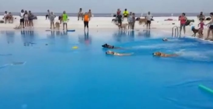 'Al agua patas': el chapuzón más divertido en Garachico