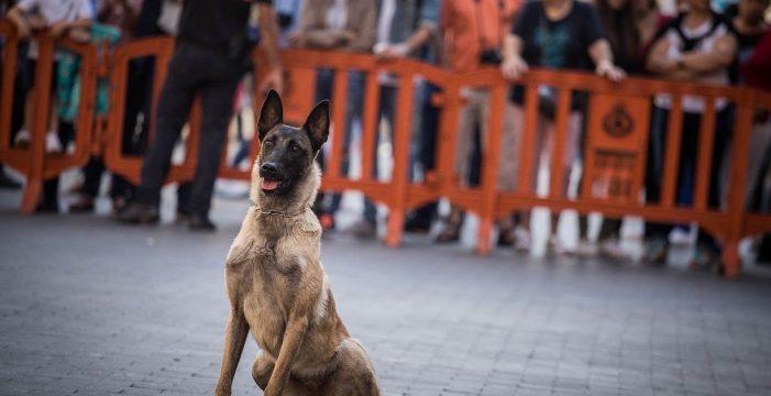 Santa Cruz hace un llamamiento a la responsabilidad en el Día de los animales