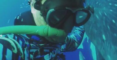 Enrique Untiedt y el tiburón ballena