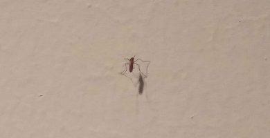 Una plaga de mosquitos invade los calabozos del Palacio de Justicia de Santa Cruz