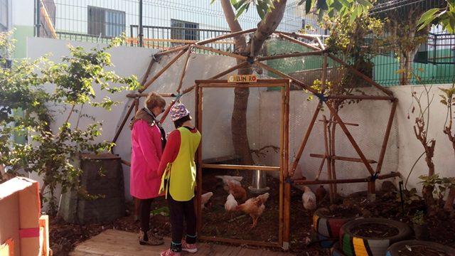 El centro Inés Fuentes inaugura el primer huerto sensitivo de Canarias