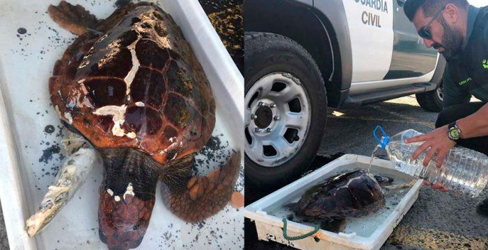 La Guardia Civil rescata una tortuga marina gravemente herida en Tenerife