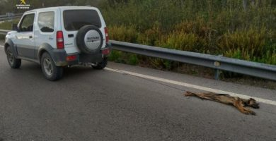 Cachorro muerto arrastrado por el coche | GUARDIA CIVIL