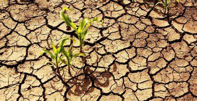 La falta de lluvia seca las charcas de Erjos y refleja la grave situación en la Isla