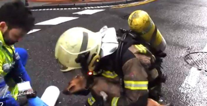 La reanimación más conmovedora: salvan a un perro de un incendio