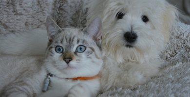 Apoyo unánime en el Congreso para dejar de considerar 'cosas' a las mascotas