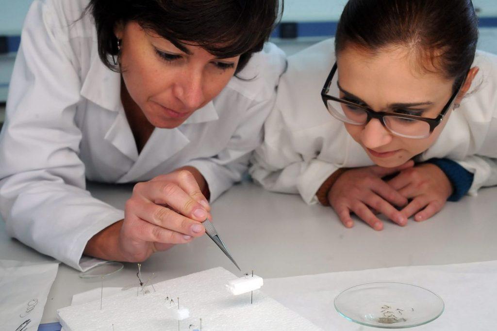 La especialista del Instituto de Enfermedades Tropicales Cristina Pou (Izquierda) observa un ejemplar de 'Aedes aegypti' en el laboratorio. DA