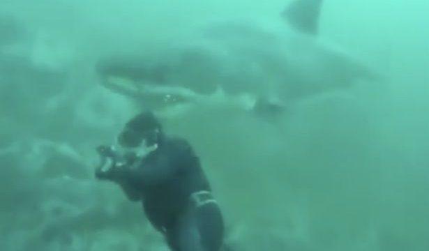 Un tiburón blanco casi arranca la cabeza a un buceador