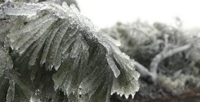 Vegetación helada en Izaña este 7 de enero. / CANARY WEATHER