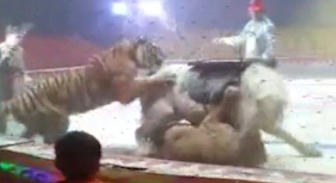 Un león y un tigre atacan a un caballo en plena función en un circo