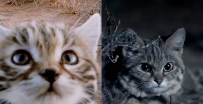 El gato más mortífero del planeta es también el más adorable