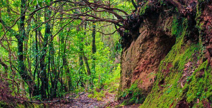 Santa Cruz planea controlar el acceso de los visitantes a Anaga para evitar riesgos en el ecosistema