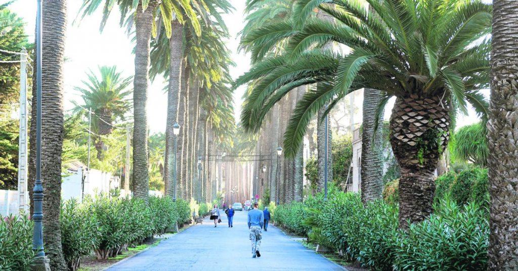 La mayoría de las palmeras que bordean el Camino Largo son centenarias y caracterizan a este paseo. Sergio Méndez