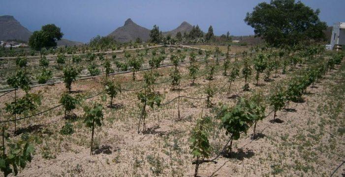 Guía pide la desaladora al máximo rendimiento para combatir la sequía