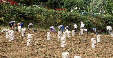 Preocupación en el sector agrícola por el posible recorte del 30% en ayudas de la UE