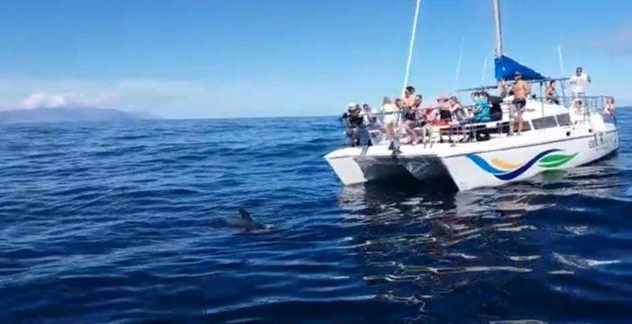 Denuncian en Fiscalía el atropello de ballenas piloto frente a Costa Adeje