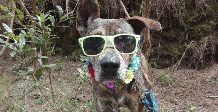 Juancho, el perro 'invisible' de Valle Colino que se disfraza para ser adoptado