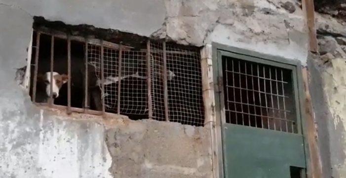 Abren una investigación al hallar cinco perros encerrados en una cueva en La Palma