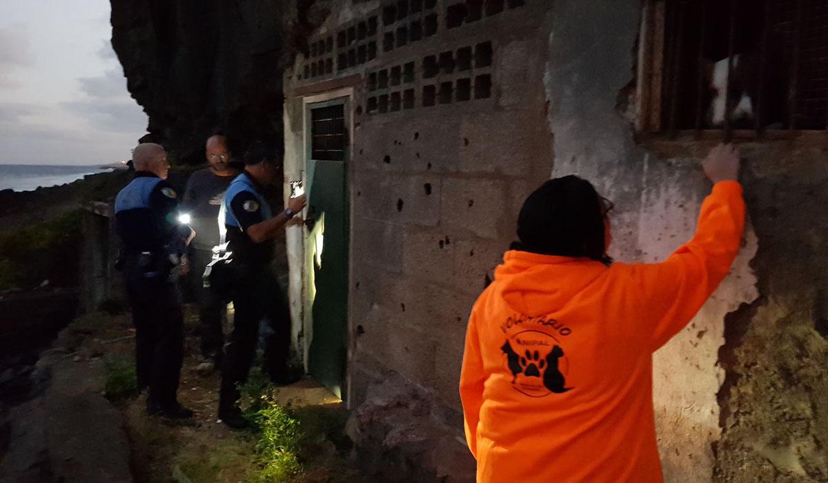 Encuentran cinco perros podencos encerrados en una cueva. DA