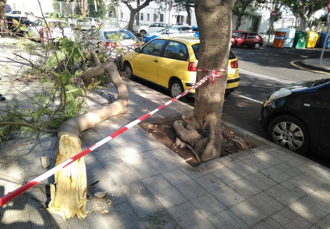 La rama caída. / POLICÍA LOCAL SC
