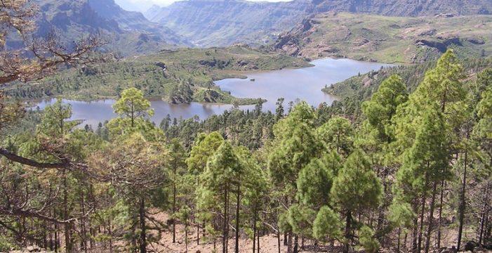 Las presas de Gran Canaria reciben agua para casi tres años de riego agrícola