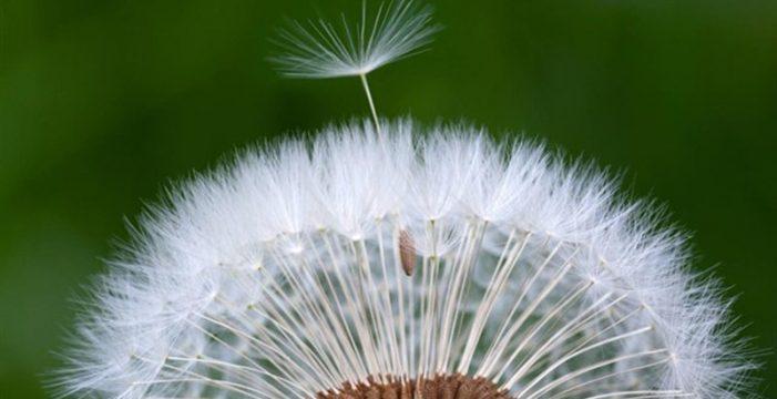 Así será la primavera este año para los alérgicos en Canarias