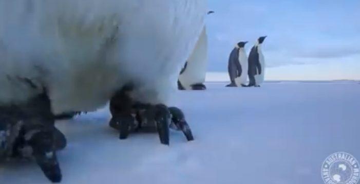 Un pingüino se hace un 'selfie' sin querer y conquista Facebook