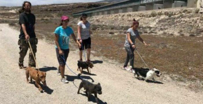 Iniciativa para sacar a pasear a los perros de Tierra Blanca