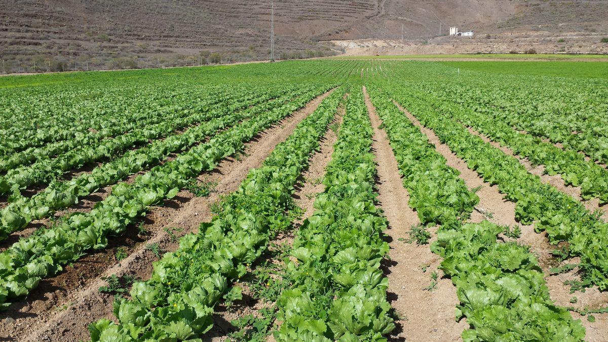 Las últimas lluvias permitirán a los agricultores sureños afrontar los próximos meses con mayor tranquilidad. DA