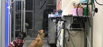 Conmovedor vídeo viral: vigila a sus cachorros prematuros como si fuera una persona