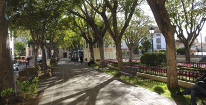 Siete árboles de la plaza del Kiosco deben talarse para evitar daños