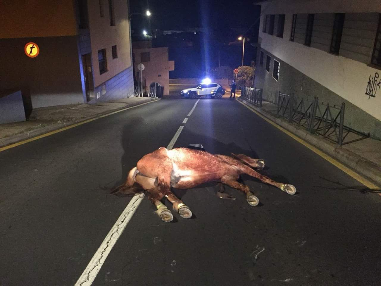 Caballo fallecido en el accidente. / POLICÍA LOCAL LA LAGUNA