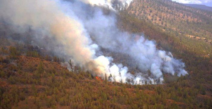 Los expertos advierten de los peligros que acechan a los bosques de Canarias