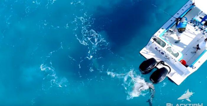 El ataque de un tiburón toro a un barco a vista de drone