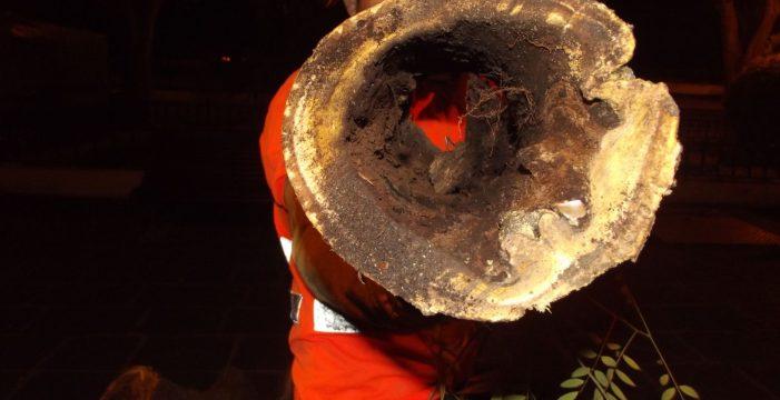 Los daños en los árboles talados de La Orotava son más graves de lo previsto