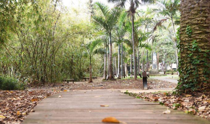 Vallan el paseo del bambú en el García Sanabria para evitar el robo de plantas