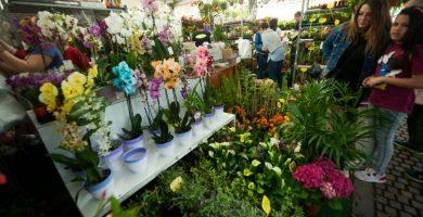 Este año son 22 los expositores que participan en la Feria de Flores y Plantas. Fran Pallero
