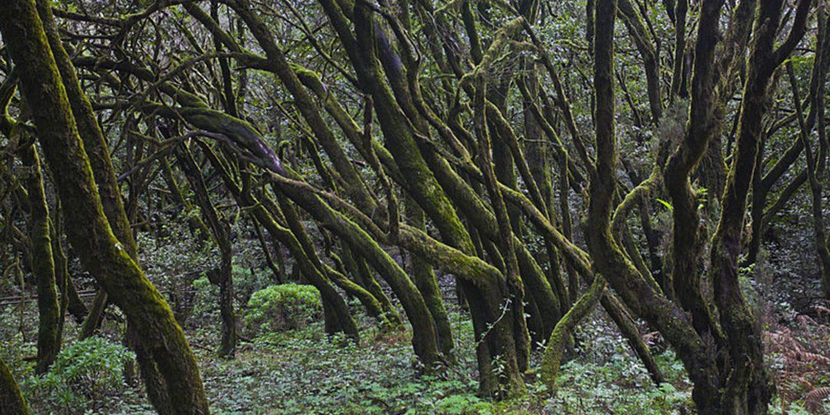 El Parlamento de Canarias autoriza a La Gomera y La Palma a gestionar sus parques nacionales