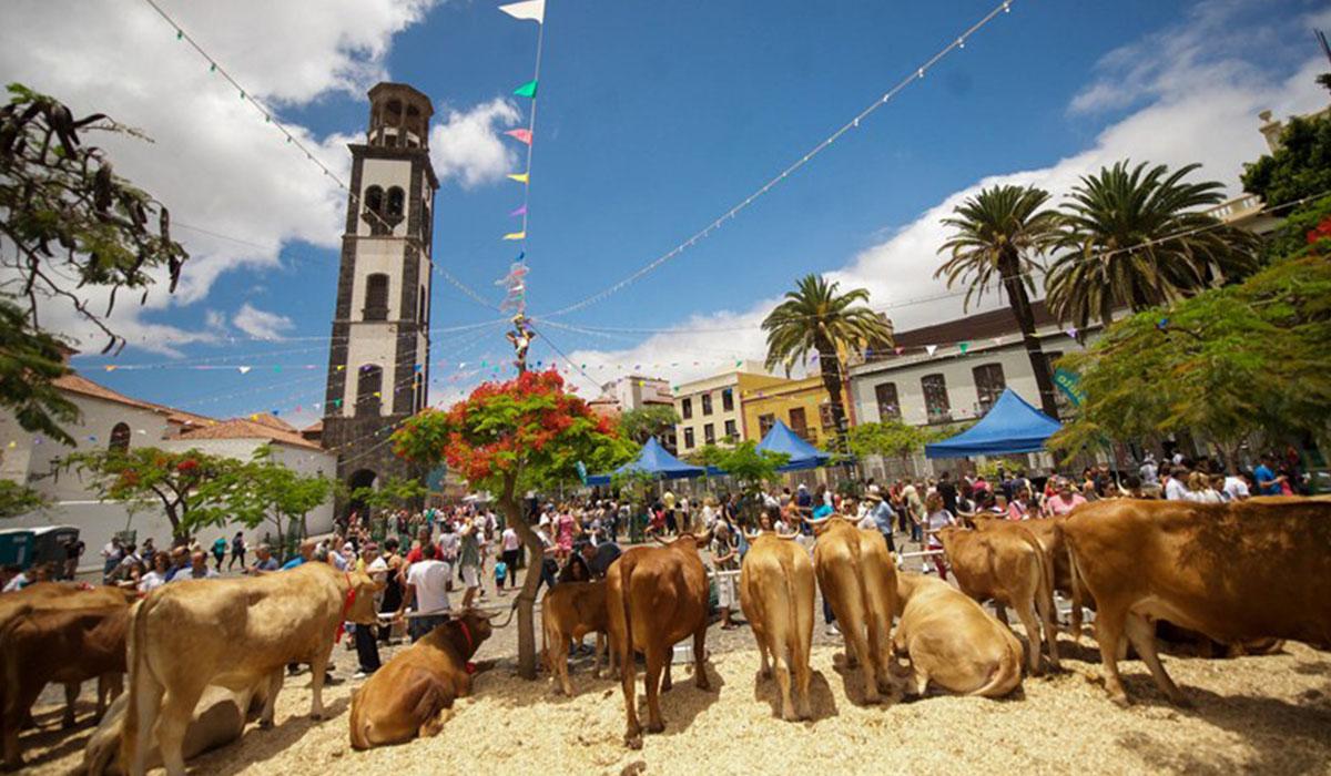 Grupos para conocer gente en Santa Cruz de Tenerife