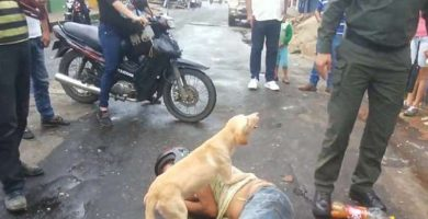El perro, defendiendo a su dueño, que duerme plácidamente en mitad de la calle. / DAILY MAIL