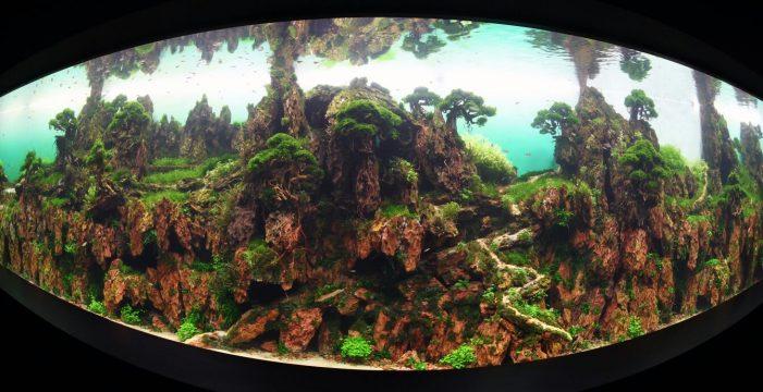 Loro Parque inaugura con éxito un jardín sumergido único en el mundo