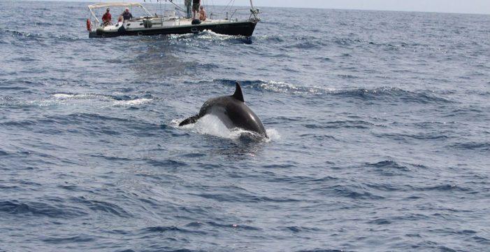 Acusan a Turismo de no tramitar las denuncias de barcos ilegales en el Sur