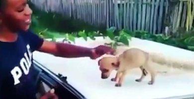 Ríe a carcajadas tras grabar un nuevo caso de maltrato animal