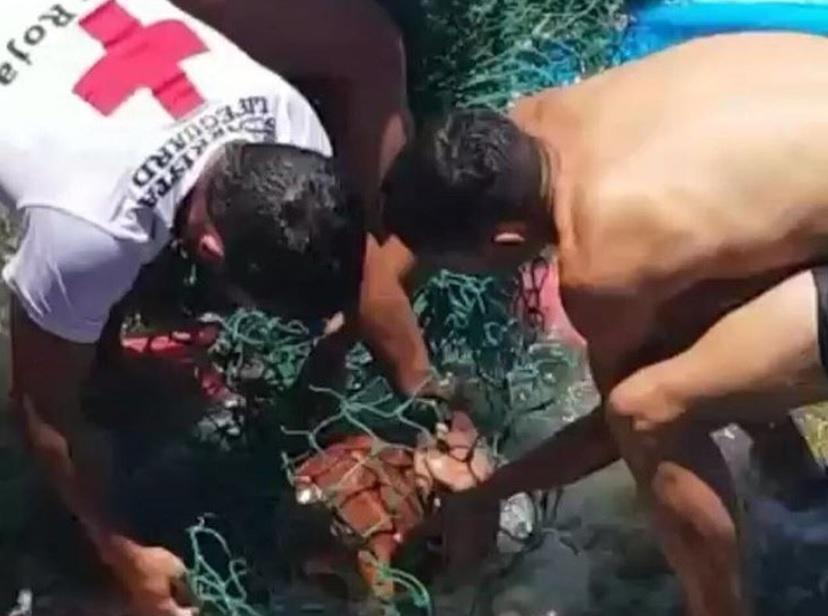 Rescate de una tortuga en Las Caletillas
