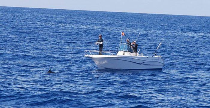 Denuncian en Fiscalía al primer barco por pescar entre delfines en Arona