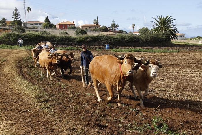El público que asista hoy a la maniobra de ganado conocerá 'in situ' cómo se maneja a los animales en el terreno. DA