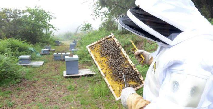 'Apadrina una colmena', la miel más solidaria de Tenerife